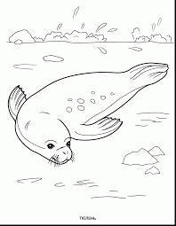 extraordinary water animals coloring pages with water coloring