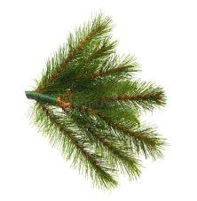 artificial pine tree branch stock photos image 35587473