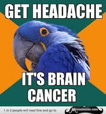 Paranoid Parrot Memes - paranoid parrot meme paranoid parrot pinterest meme anxiety