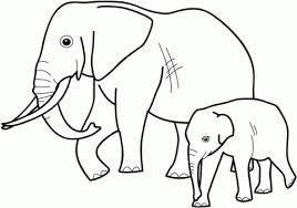 zebra coloring pages elephant free printable wild animals coloring