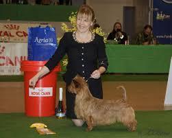 affenpinscher uppf are södermanland kennelklubbs internationella hundutställning 2017