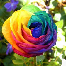 Home Plant Decor by 20pcs Colorful Rainbow Rose Valentine Lover Flower Seeds Garden