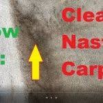 roseville carpet and upholstery cleaning service servicing woodcreek