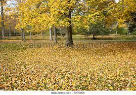 fall color road ohio stock photos u0026 fall color road ohio