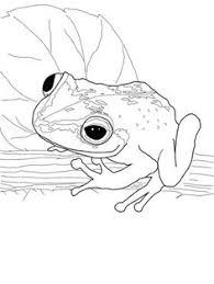 coloring pages of around the pond lily pad frog love to sit