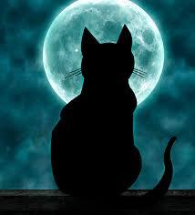 cat with moon by kuvaajankulma on deviantart