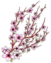 collection of 25 cherry blossom flowers design
