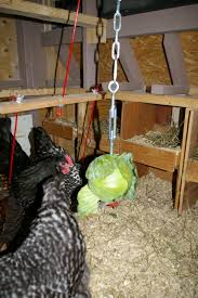 How To Have Chickens In Your Backyard by Boredom Buster Community Chickens