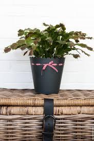 Indoor Fragrant Plants Tips For Beautiful Healthy Indoor Plants The Slow Pace