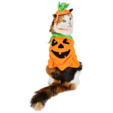 Pet Cat Halloween Costume Cutest Pet Halloween Costumes Cats Dogs