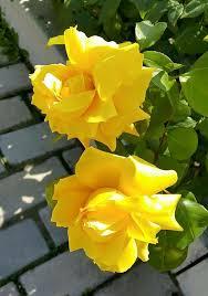 imagenes lindas naturaleza pin de janina en rosengarten pinterest rosas flores y cosas lindas