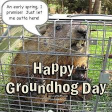 happy groundhog quote pictures photos images