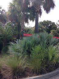 radiant native charleston landscape design lowcountry vistas
