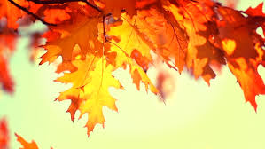thanksgiving day vintage background ancient fall autumn