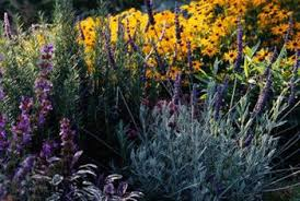 Plants That Repel Aphids by Perennial Flowers That Repel Insects Home Guides Sf Gate