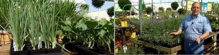 best videos about planting a fall vegetable garden