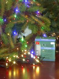 Hydro Christmas Tree Stand - 25 best sinamay craze images on pinterest sinamay hats