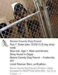 bluetick coonhound kennels in ga 13 best rest in peace images on pinterest peace animal shelter