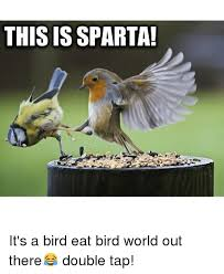 Funny Bird Memes - 25 best memes about funny funny memes