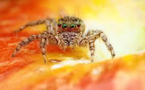 scary spider wallpapers hd wallpapers