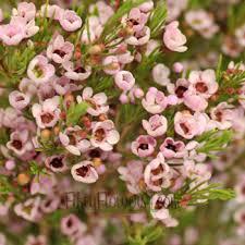 Flower Wholesale Wax Flower Wholesale Bulk Flowers Fiftyflowers
