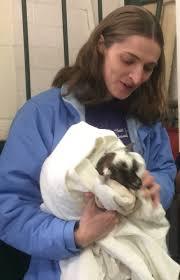 Veterinary Clinic Idaho Veterinary Internal Weiser Veterinary Clinic Veterinarian In Weiser Id
