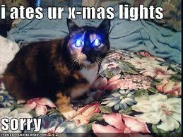 Funny Christmas Cat Memes - christmas cat puns