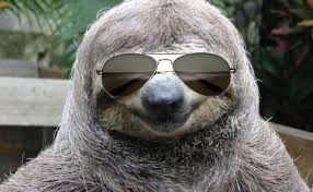 Angry Sloth Meme - which florida roller coaster are you playbuzz