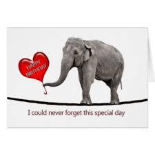 funny elephant birthday cards funny elephant birthday greeting