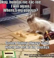 Monday Memes Funny - rabbit ramblings funny bunny monday meme day