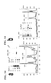 patent us20030007978 recombinant mhc molecules useful for