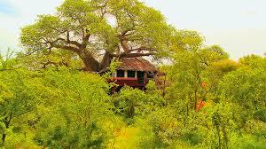 elewana collection photo gallery tarangire treetops