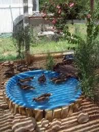 17 best ideas about duck duck pond drain newman