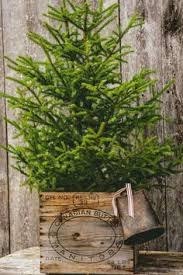 Raz 2013 Forest Friends Decora - rustic christmas tree u2026 christmas pinterest rustic christmas