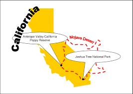 Joshua Tree California Map Wildflowers In The Mojave Desert The Garden Lady