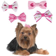 dog ribbon 35 best dog hair bows images on dog hair bows loom