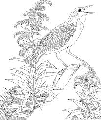 free printable coloring page state birds and flowers coloring