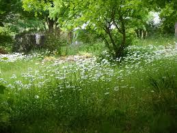 wild flower garden tips u0026 ideas home garden design