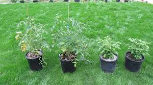 Fiber Soil the coco coir vs soil experiment day 52 youtube