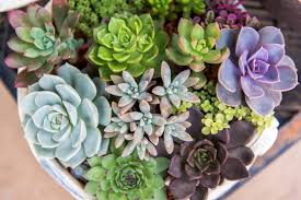 succelents how to care for succulents blooming desert pools u0026 landscapes