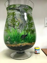 Aquascape Canada Betta Fish Tanks U2013 Dreadwood Us