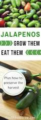10 Tips For Growing Peppers by Best 25 Vegetable Gardening Ideas On Pinterest Gardening