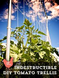 Tomatoes Trellis The Indestructible Diy Tomato Trellis The Petite Farmstead
