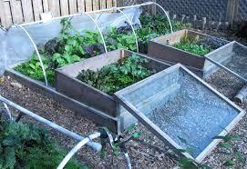 Self Sustaining Garden | our fall winter garden low cost low effort self sustaining