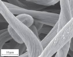 biomimicry in textiles past present and potential an overview