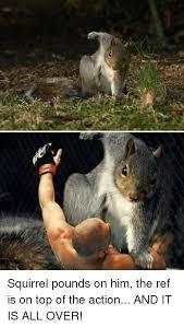Dramatic Squirrel Meme - squirrel and squirrel meme on me me