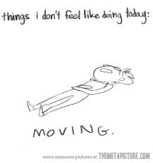 Lazy Day Meme - pin by meena holguin on make me laugh pinterest sick humour