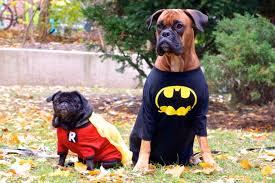 Halloween Costumes Boxer Dogs Boxer Lola Pug