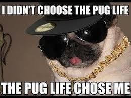 Funny Meme Pictures 2014 - funny dog memes 2014 animal memes vdo fb