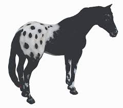black mustang horse black appaloosa stallion collecta figures animal toys
